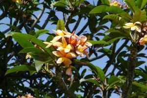 flower-418164_1280