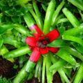 Einer der herausragenden Eigenschaften Costa Ricas ist die unberührte Natur
