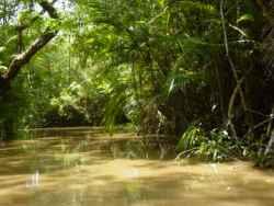 Den Amazonas erleben