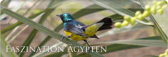 Flora & Fauna Ägypten