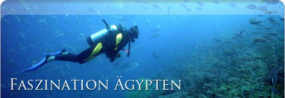 Unterwasserwelt Sharm el-Sheikh Ägypten