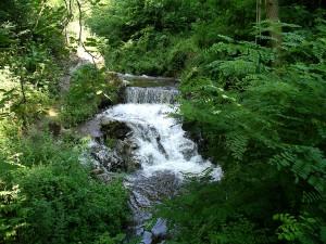 Fluss in einem Naturpark