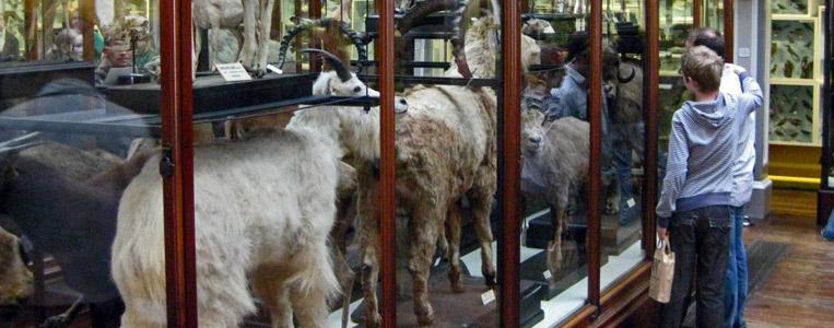 Exponate heimischer Tiere im Irish Room des Natural History Museum