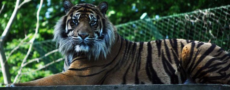 Ein Besuch des Dubliner Zoos im Phoenix Park lohnt sich immer!