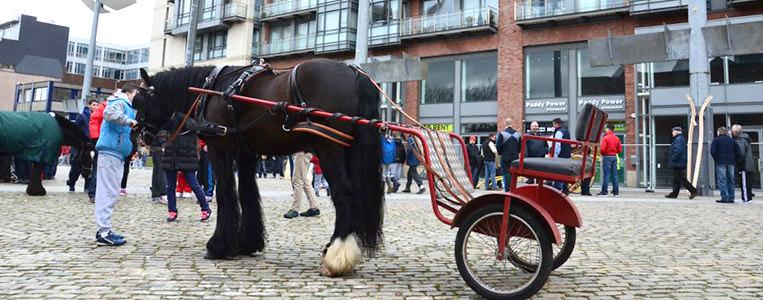 Zum Schnäppchenpreis als Gesamtpaket: Pferd mit Sulky