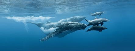 La Réunion Wale und Delfine