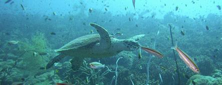 Marsa Alam Unterwasserwelt