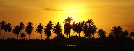 cookinseln kokospalmen