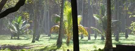 La Réunion Vegetation