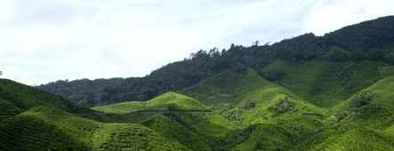 malaysia teeplantage