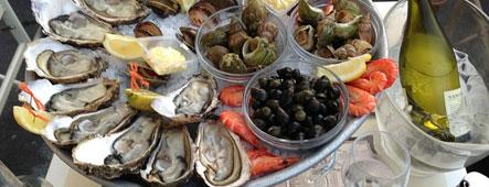 Nizza Muscheln Austern