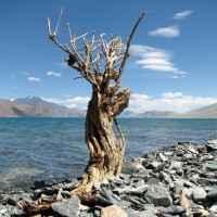 Pangong See in Ladakh