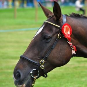 Die Dublin Horse Show lockt jedes 100.000 Pferdeenthusiasten nach Dublin.