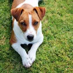 Urlaub mit Hund in Irland