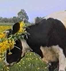 Frisch gezapft, ist Milch ein Stück Lebenskraft
