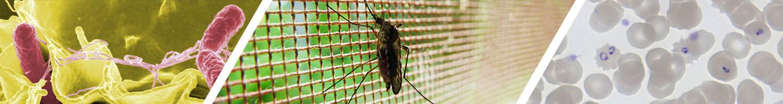 Malaria.info Banner