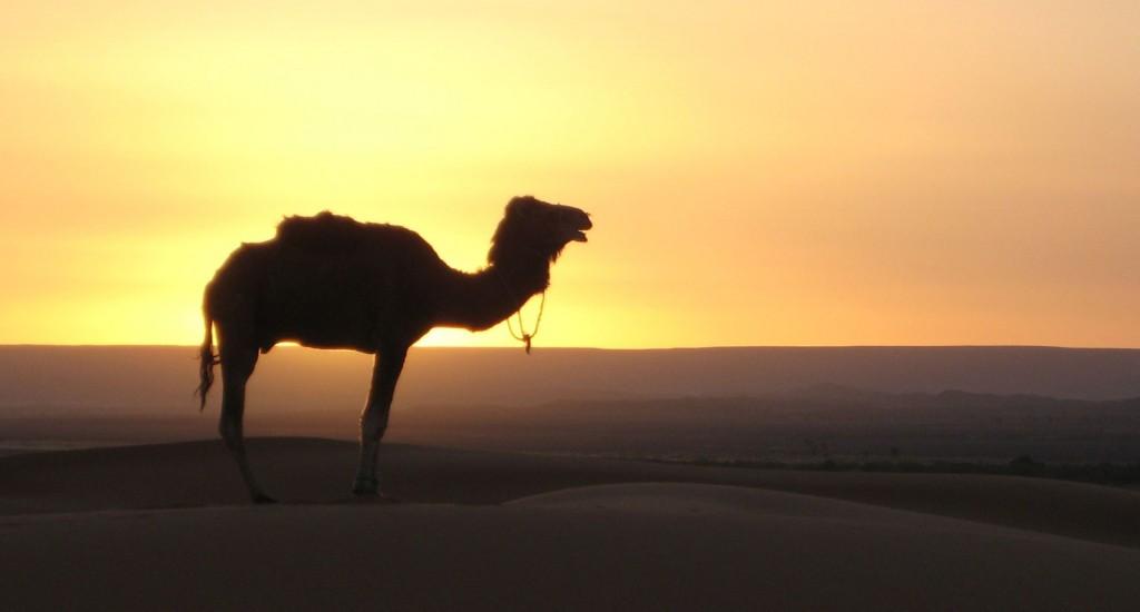 Kamelmärkte