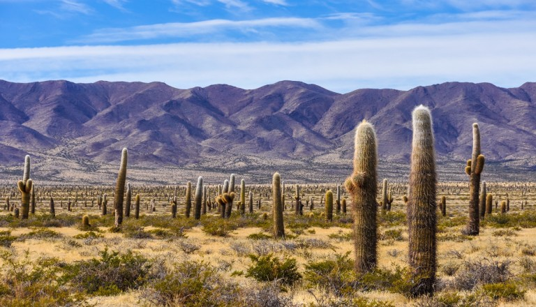 Der Nationalpark Los Cardones in Argentinien.