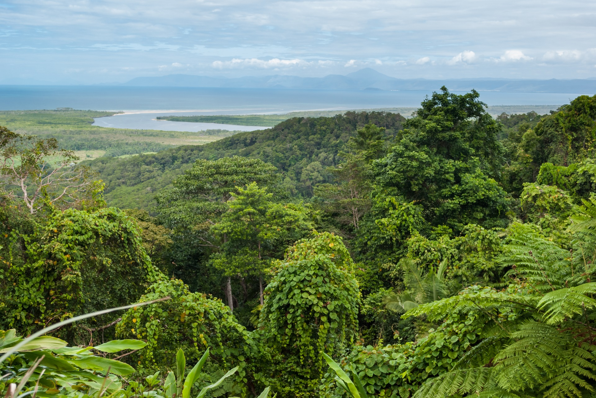Der Daintree National Park