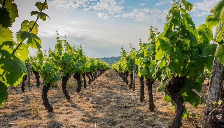 Das Weinanbaugebiet Beaujolais bei Lyon.