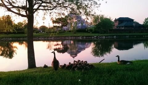 Belle Isle Park Detroit