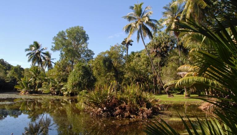 Die Flecker Botanical Gardens beim Stadtteil Edge Hill in Cairns