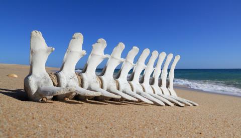 Faro Strand Knochen