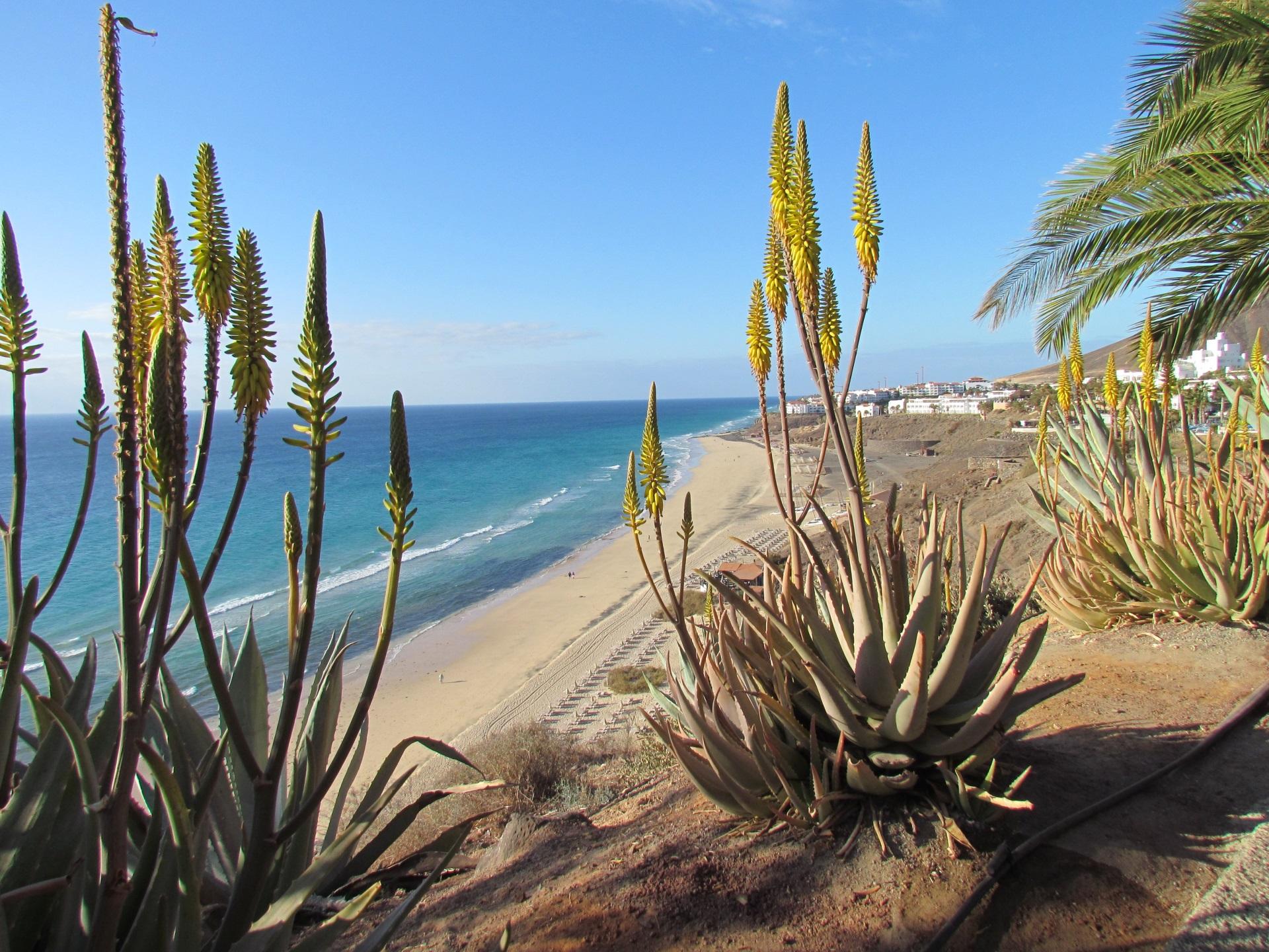 Alleine nach Fuerteventura. Wir haben die passenden Angebote.