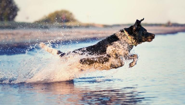 Hund-Ostsee-Familienurlaub