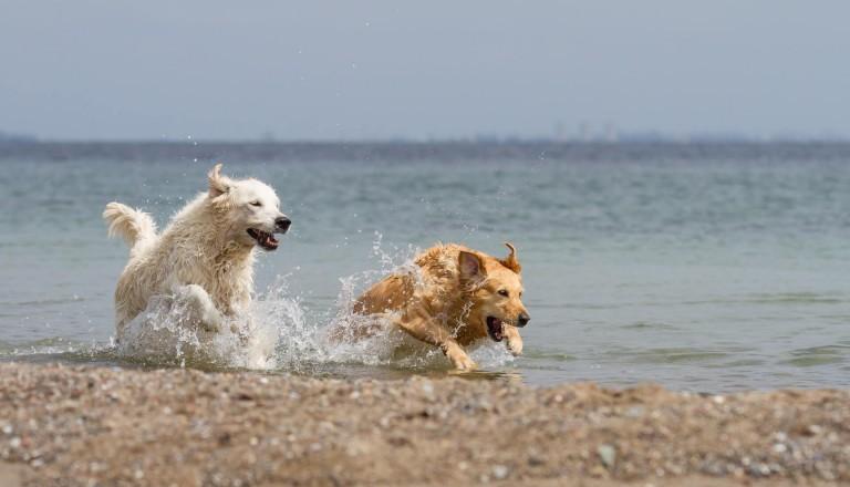 Hundestrand-Nordsee