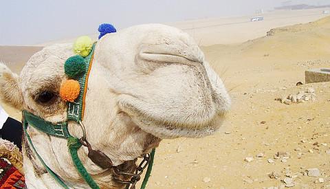 Ein Highlight für Kinder -Ein Ritt auf einem der sympathischen Wüstenschiffe durch die Sahara.