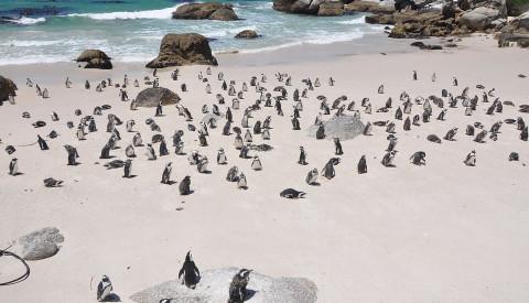 Die Pinguininsel Isla Magdalena