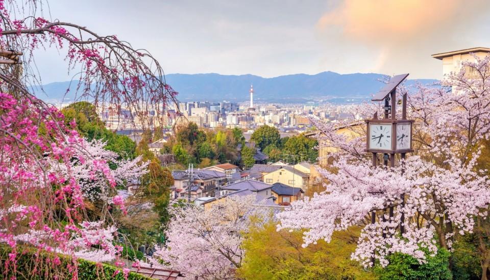 Kyoto während der Kischblüte.