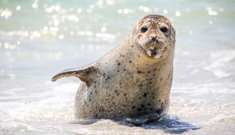 Seehunde-Nordsee-Familienurlaub