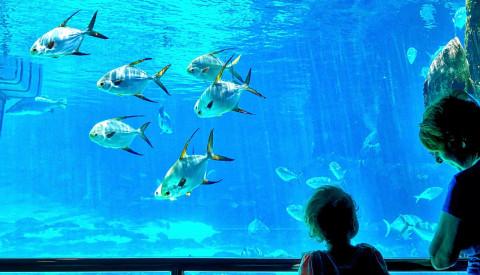 Ozeanographische Museum Tunis