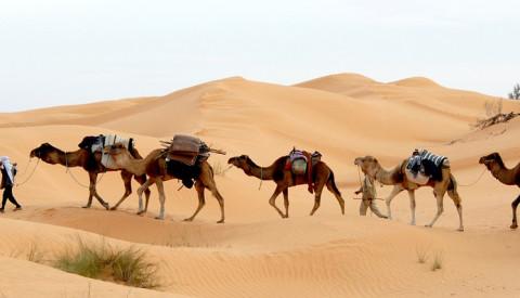 Sahara - die größte Trockenwüste der Erde