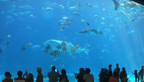 Das Georgia Aquarium ist das größte der USA!