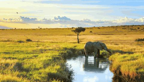 Elefant Masai Mara
