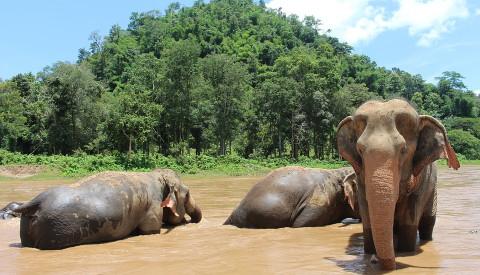 Der Nationalpark Doi Suthep-Pui birgt eine Vielzahl an Attraktionen.