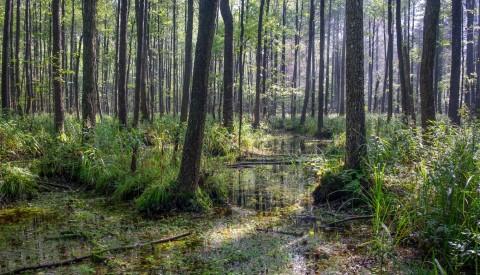 Bialowieska Nationalpark