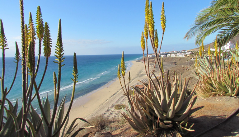 Cluburlaub auf Fuerteventura