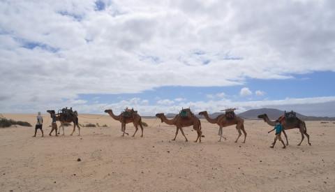 Fuerteventura: Ein Spaß für Jung & Alt.