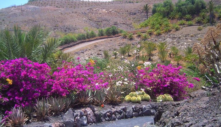 Naturgenuss auf Fuerteventura