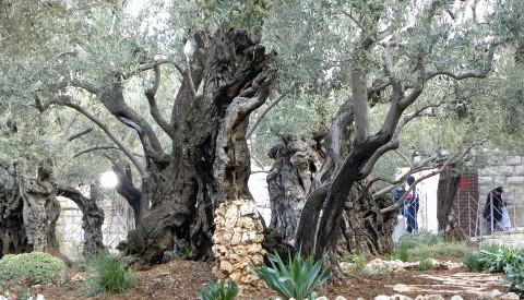 Der Garten von Gethsemane