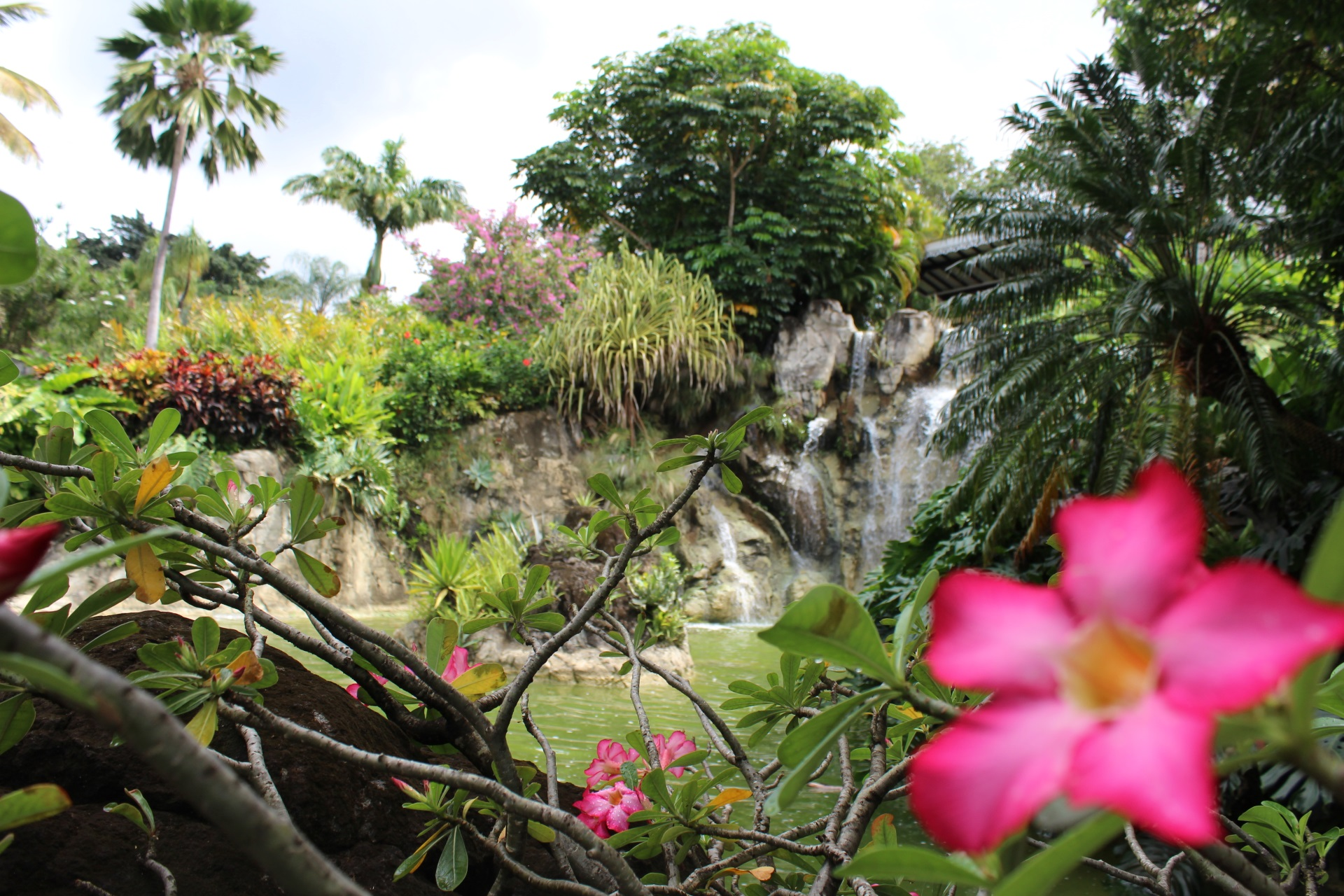 Basse Terre Guadeloupe