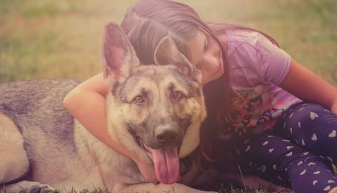 Hund mit Familienanschluss