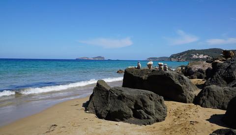 Ibizas Natur gibt es sogar gratis!