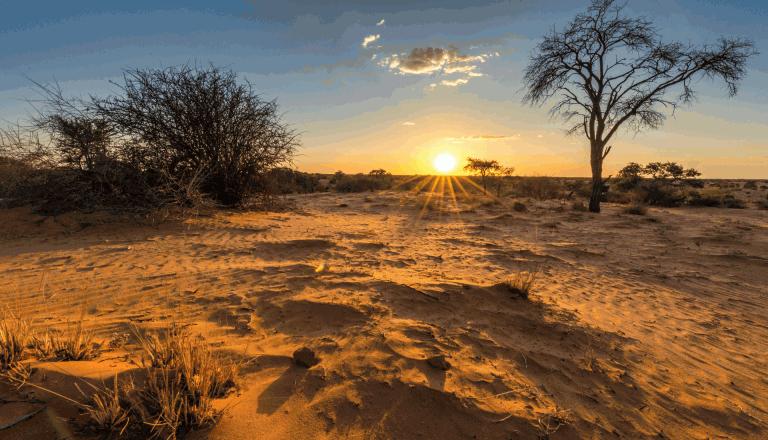 Kalahariwüste