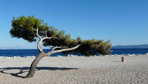 Hier unsere Top5 der schönsten Strände Kroatiens.