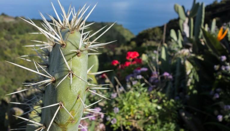 Auf La Palma lässt es sich wunderbar Wandern.